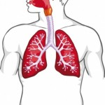 Wie funktioniert die Atmung?