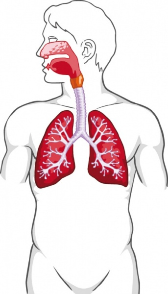 atmungsorgane des menschen altenpflege
